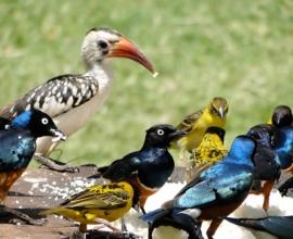 9 Days Kenya Ornithological Tours Safari