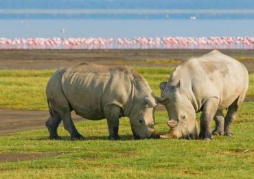 best budget safari kenya