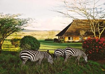 3 days 2 nights Mara Keekorok Lodge