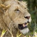 3 Day Maasai Mara Joining Safari