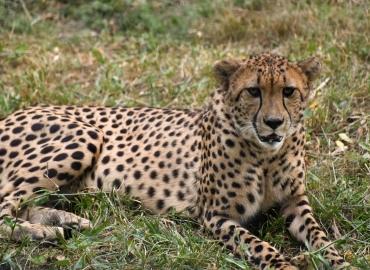 10 Days Lake Turkana Camping Safari Tours