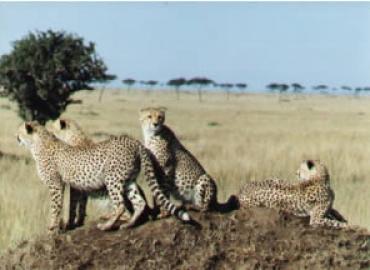 8-Day Kenya safari to  Samburu Sweet Waters Nakuru Naivasha Mara