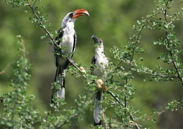 16 Days Kenya Birding Tour Holiday