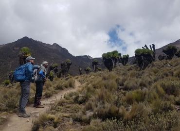 Mount Kenya holidays. Trekking holidays to Mount Kenya
