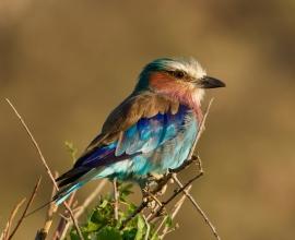 14 Days Kenya Birding Safari Adventures